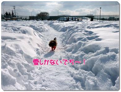 雪だらけ!