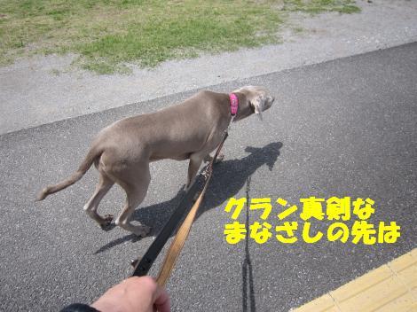 IMG_7983_convert_20110516121341.jpg