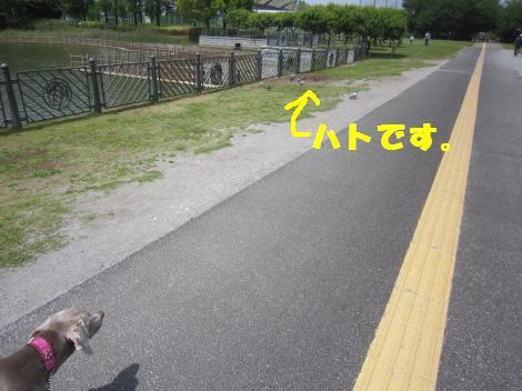 IMG_7984_convert_20110516121357.jpg