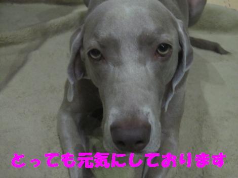 IMG_8206_convert_20110608121845.jpg