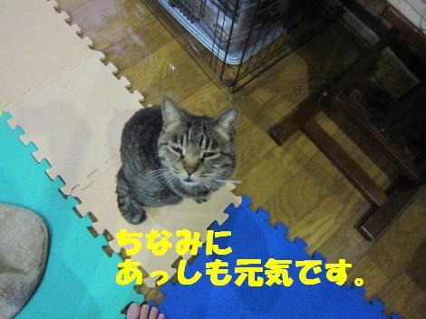 IMG_8215_convert_20110608121905.jpg