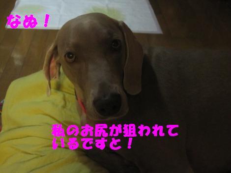 IMG_8282_convert_20110619102324.jpg