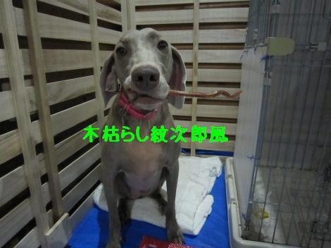 IMG_8658_convert_20110807104652.jpg