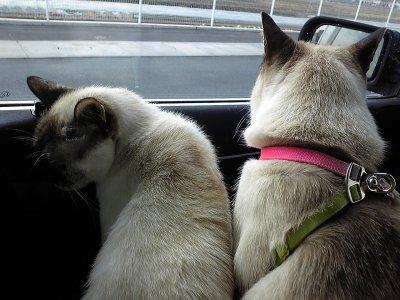 タヌさんとエピさん(ドライブ中)