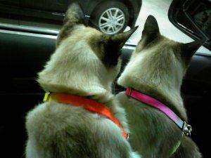 タヌさん&エピさん~仲良くドライブ中