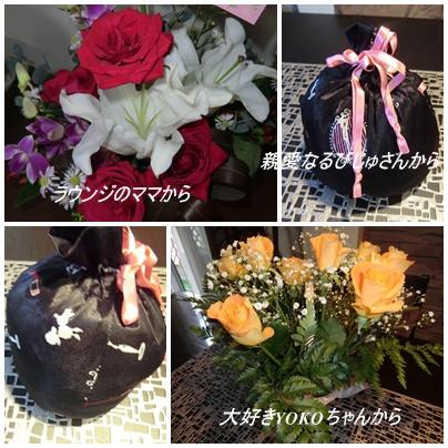 cats_20111104214522.jpg