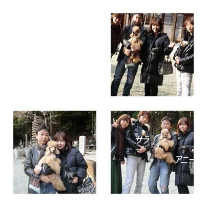 cats_20120101224958.jpg