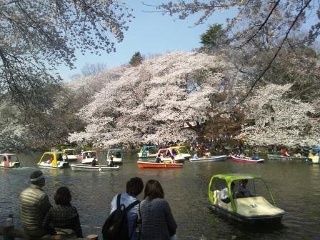 井の頭公園桜2