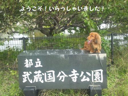武蔵国分寺公園1