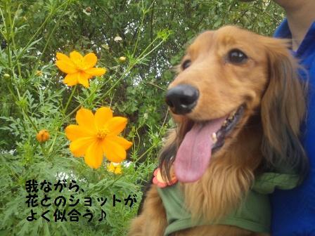 武蔵国分寺公園2