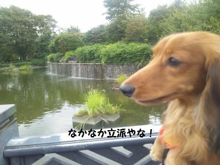 武蔵国分寺公園3