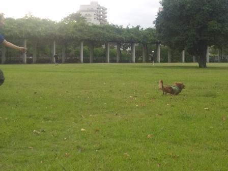 武蔵国分寺公園7
