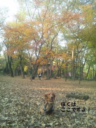 秋の井の頭公園1
