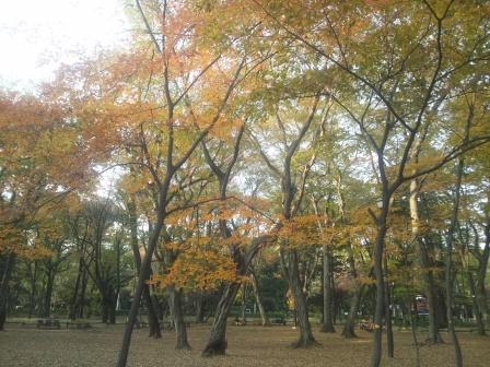 秋の井の頭公園2