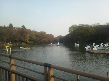 秋の井の頭公園5