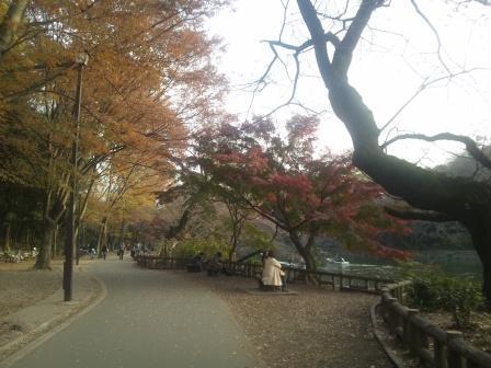 秋の井の頭公園7
