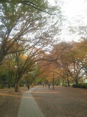 秋の井の頭公園8