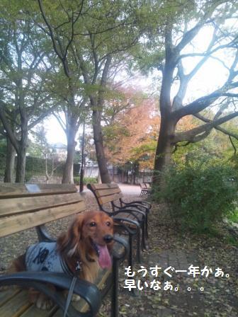 秋の井の頭公園9