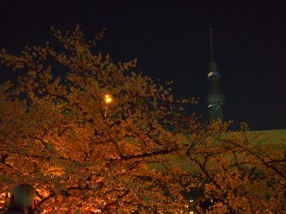20120409sakura-2.jpg