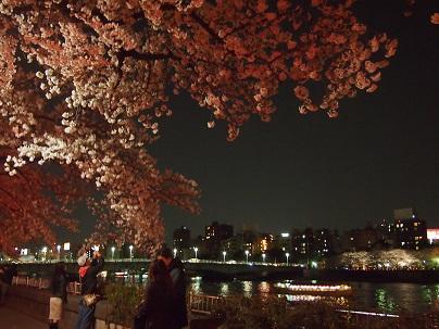 20120409sakura.jpg