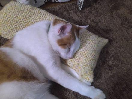 20120516ichigo-5.jpg