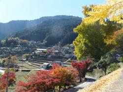 徳島 神山町 大久保の乳いちょう