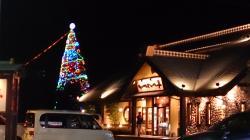 金栄小学校 クリスマスツリー
