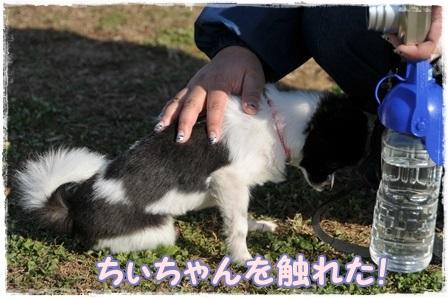 ちぃちゃん触る1