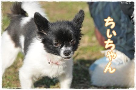 チィちゃん紹介