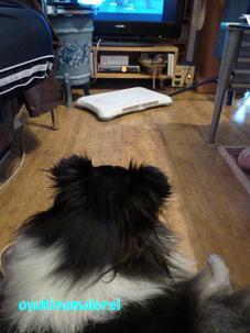 テレビ見る2011.8.28
