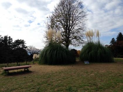昭和記念公園6