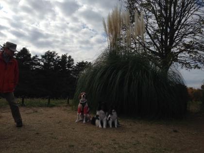 昭和記念公園7
