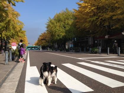 日本大通り22