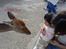 2010.9奈良公園 002