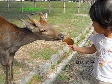 2010.9奈良公園 004