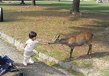 2010.9奈良公園 006