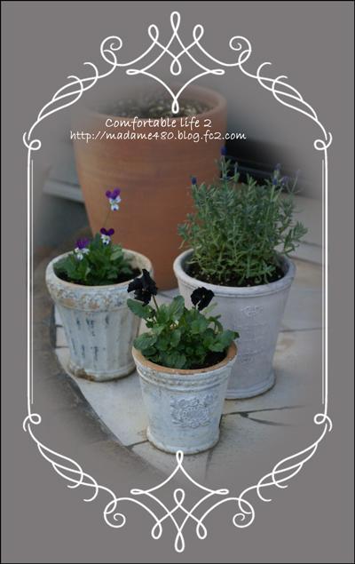鉢植え3個web用