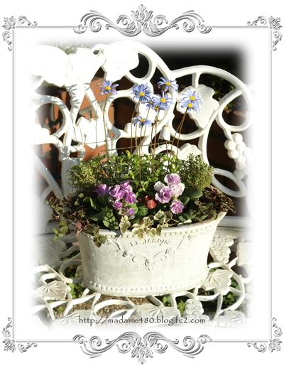 バラ咲きジュリアンの寄せ植えA