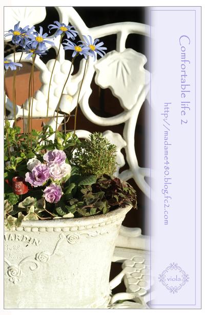 バラ咲きジュリアンの寄せ植えweb用B