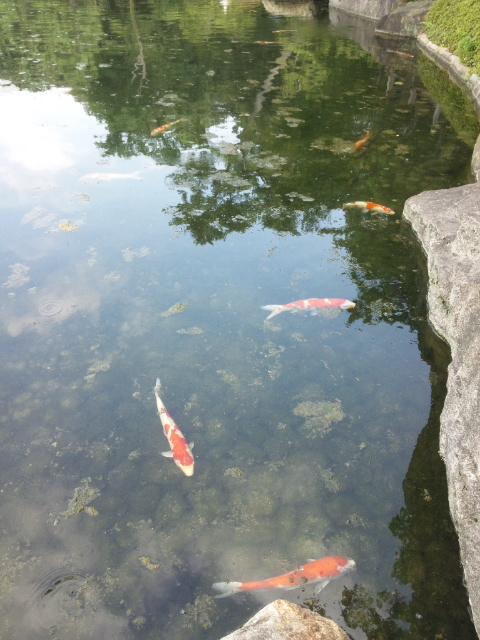 咲夜さんは徳川園へ行かれました (15)