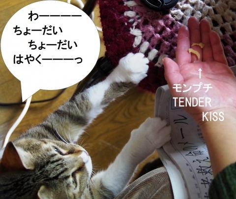 モンプチ TENDER KISS 実食中