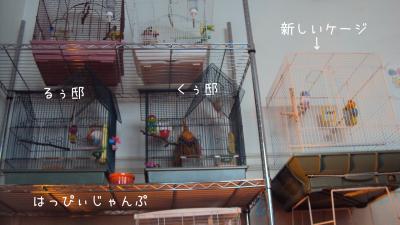 DSC07149_convert_20130124075714.jpg