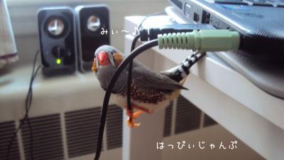 DSC07912_convert_20130212114740.jpg