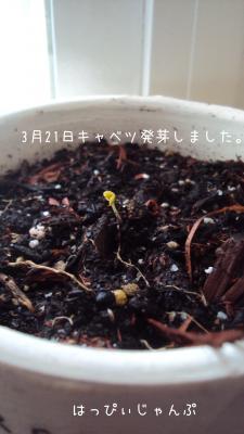 DSC09159_convert_20130323053004.jpg