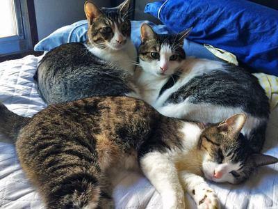 本田家の猫達
