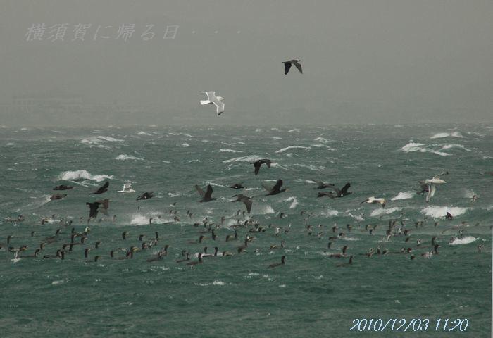 時化る海1