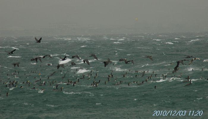 時化る海4