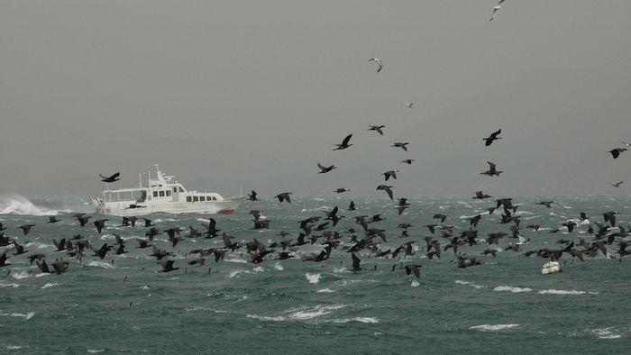 時化る海11