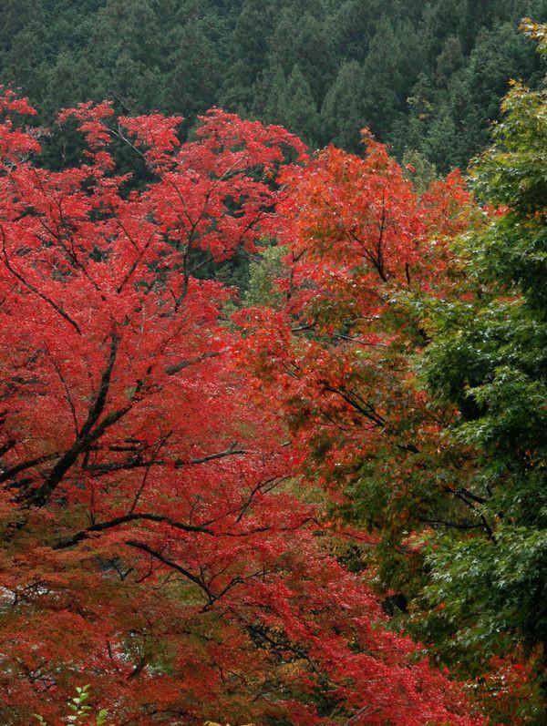 木の香界隈