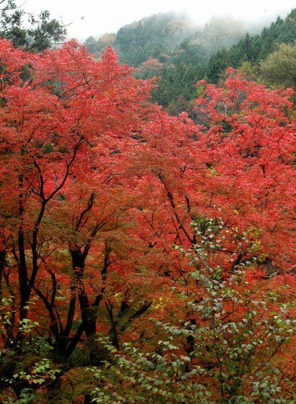 木の香界隈1